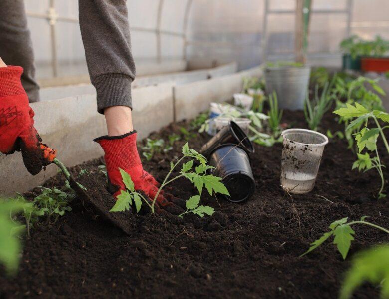 Hollanda'da Hobi Bahçesi Kiralamak